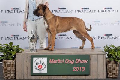 cane-corso-divina-bob-martinidogshow-2013